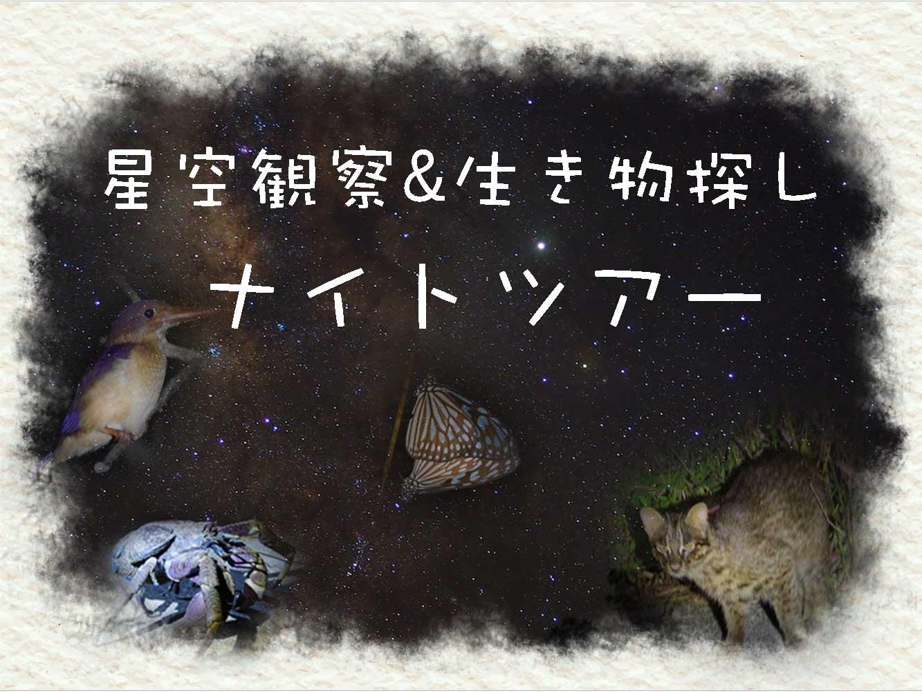 通常ナイトツアー ¥6,000
